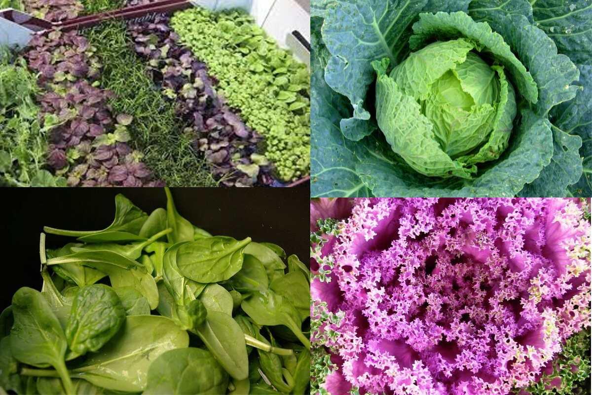 green leafy food