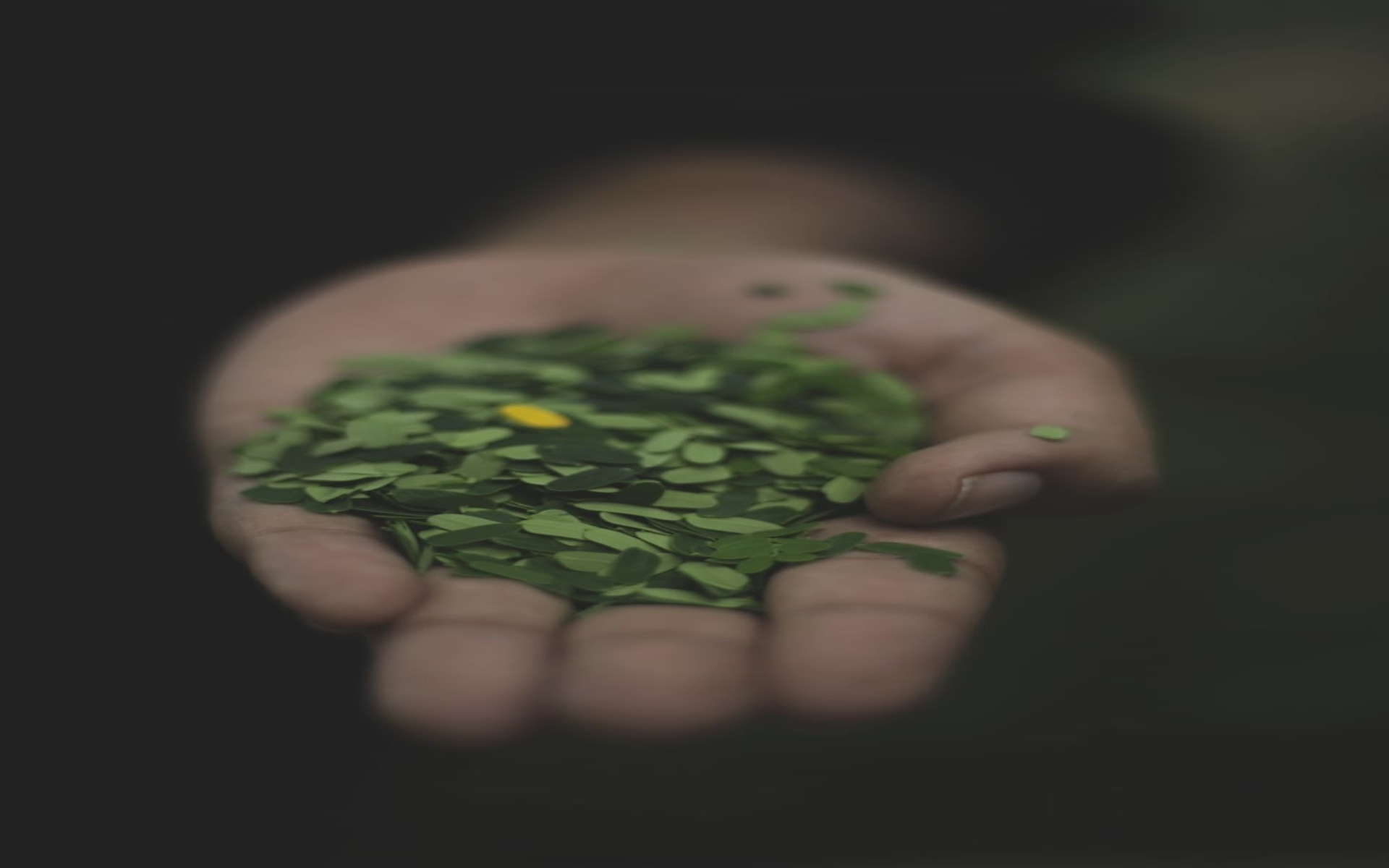 oringa Health Benefits - Amazing Benefits of Moringa for Your Health