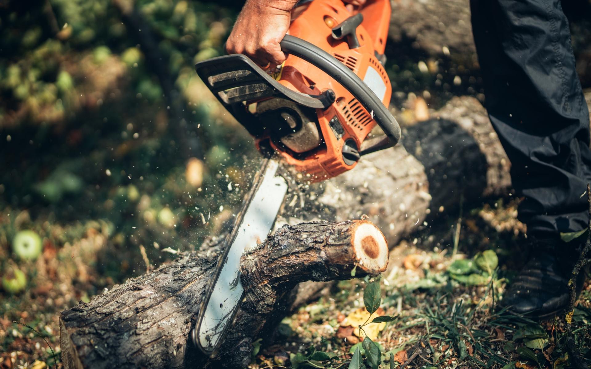 Sydney tree removals