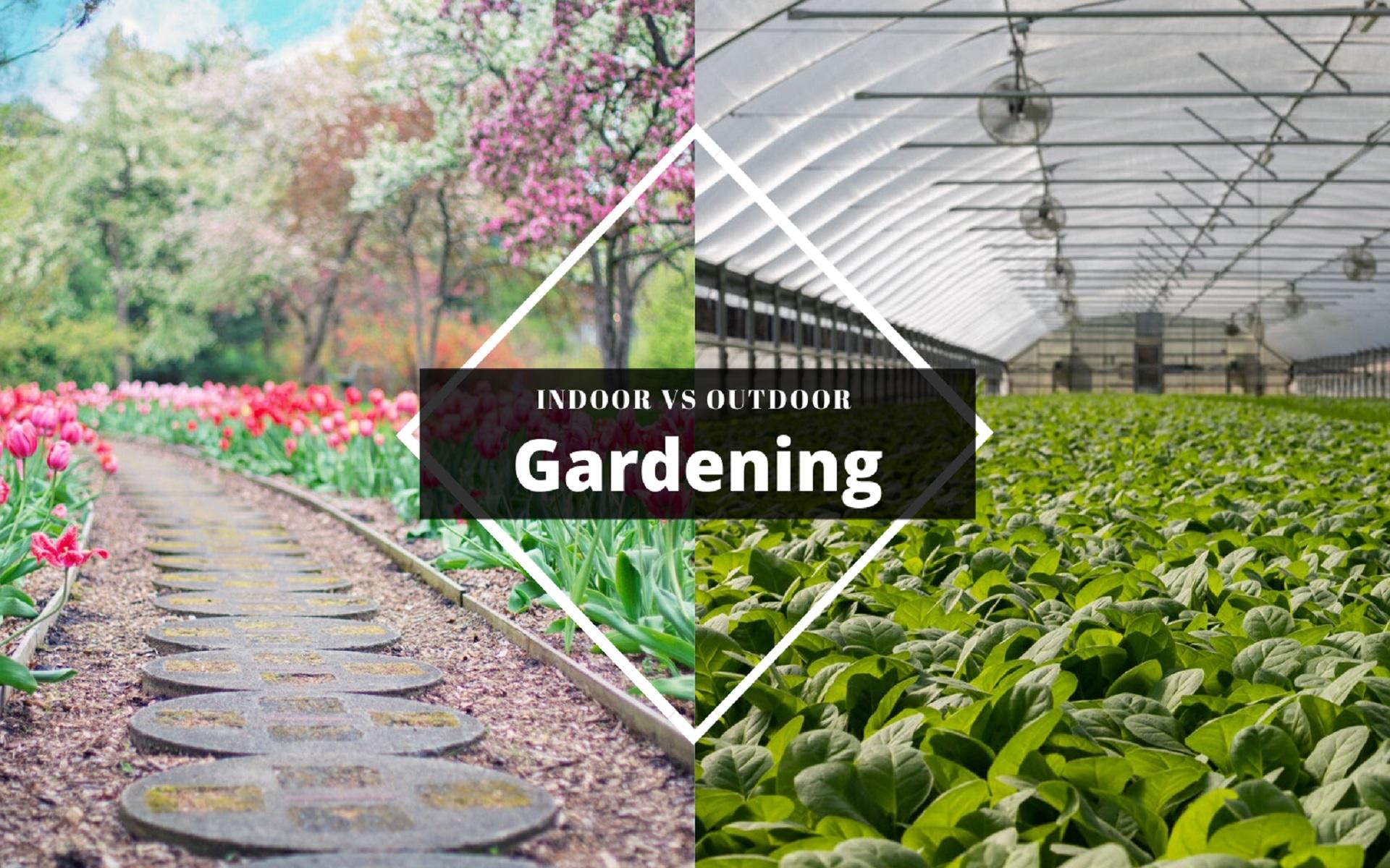 9 Benefits of Indoor Gardening over Outdoor Gardening
